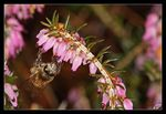 Title: Welcome Honey Bees!
