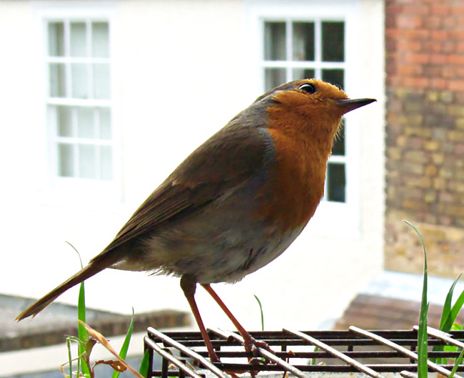 The Urban Robin - Choices, choices...