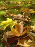 Title: Leaves on the Ground