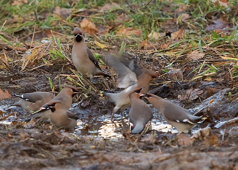 a quarrel for a small puddle