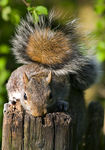 Title: Squirrel On PostCanon 350D