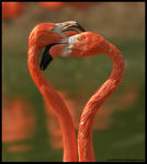 Title: Flamingo Heart *For Loot and Anna