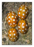 Title: A Clutch of Ladybirds!