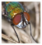 Title: Greenbottle