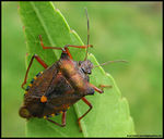 Title: Forest Bug
