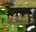 Title: Fungi of 2007 *For Red45 and Lordpotty*