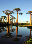Title: Avenue des Baobabs 3 Camera: Canon 1D Mark II