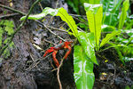 Title: Christmas Island Rainforest - With Crab