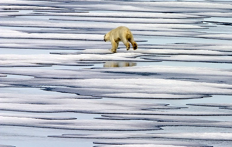 Fleeing Polar Bear