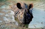 Title: Indian Rhino Spa