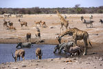 Title: At the Waterhole