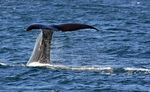 Title: Whale of a Tail