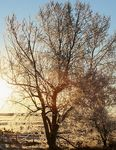 Title: morning frost