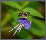 Title: Bee with Honey Drop