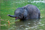 Title: Baby Elephant for  Loot !