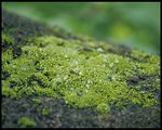 Title: small greens on a rock