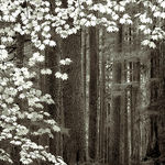 Title: Spring on the Sol Duc