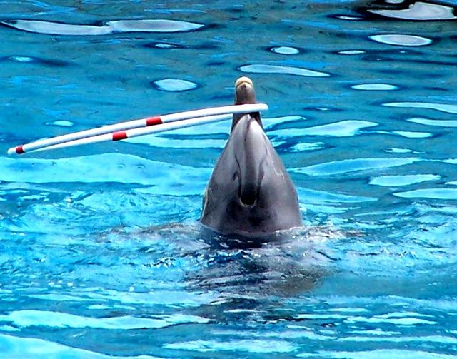 Performing Dolphin at Madrid Zoo