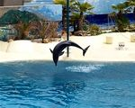 Title: Performing Dolphin #2 at Madrid Zoo
