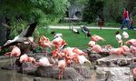 Title: Flamingos in Madrid Zoo