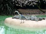Title: Another Blue Heron - London Zoo