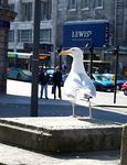 Title: Seagull  - Liverpool
