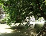 Title: The river and the tree