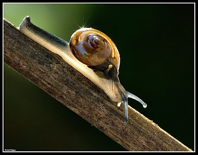 TWINKLE ON THE SNAIL