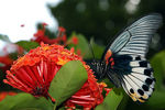 Title: Butterly in Tai O