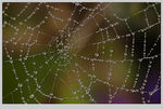 Title: DROPS ON THE WEB