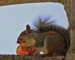 Title: Squirrel Nibble