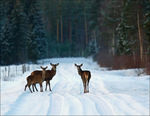 Title: Three deers