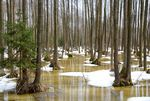 Title: Swamp forest