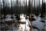 Title: forest swamp