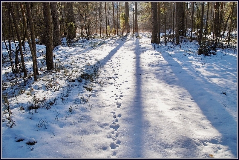 traces of animals in the forest