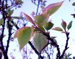 Title: blossoming leaves