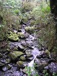 Title: Rolling Brook