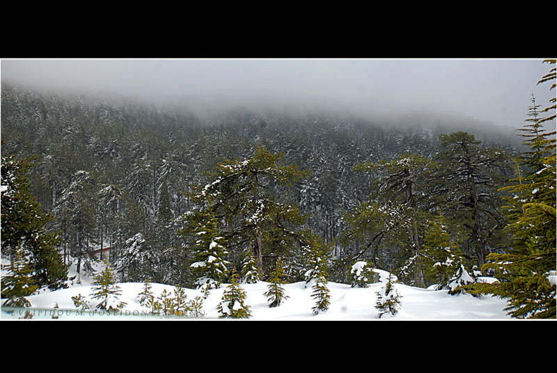12-3-2011 winter day at Troodos