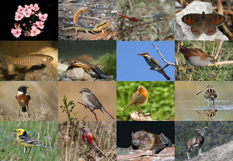 200th with biodiversity