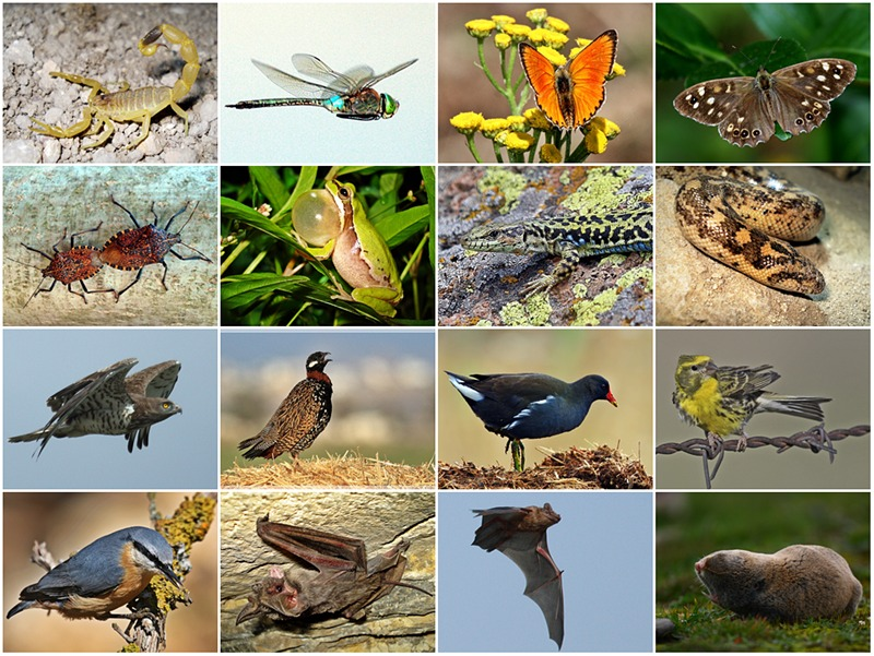 3rd year-300th post - Biodiversity II
