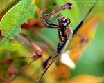 Title: Dragonfly Dinner