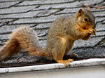 Title: Garage Squirrel