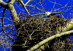 Title: Eagles nest