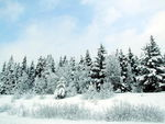 Title: Snow covered