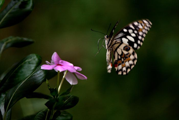 The flowers and a butterfly