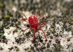 Title: red spider