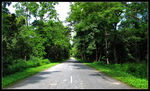 Title: Tropical jungle road