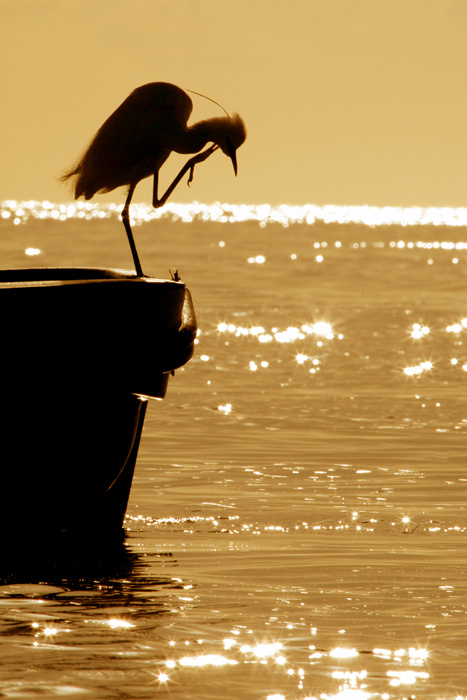 Egret at Sunrise in Mozambique