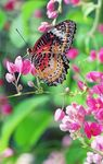 Title: spectacular lepidoptera Reposted