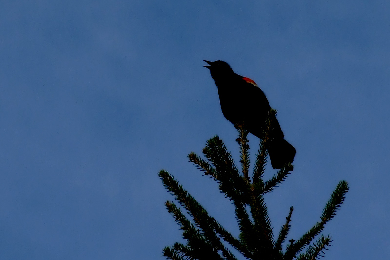 Red spot on black silhouette